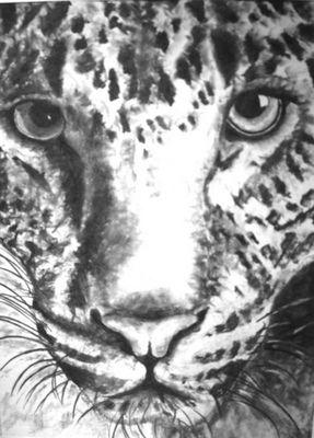 Wildkatze-Kohlezeichnung 2006