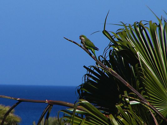 Wildlebender Papagei
