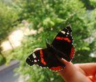 wildlebender Schmetterling