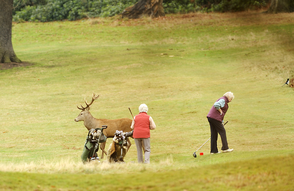 Wildlife-Golf