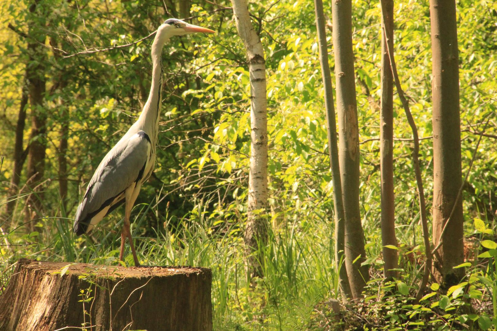 Wildlife im Spreewald