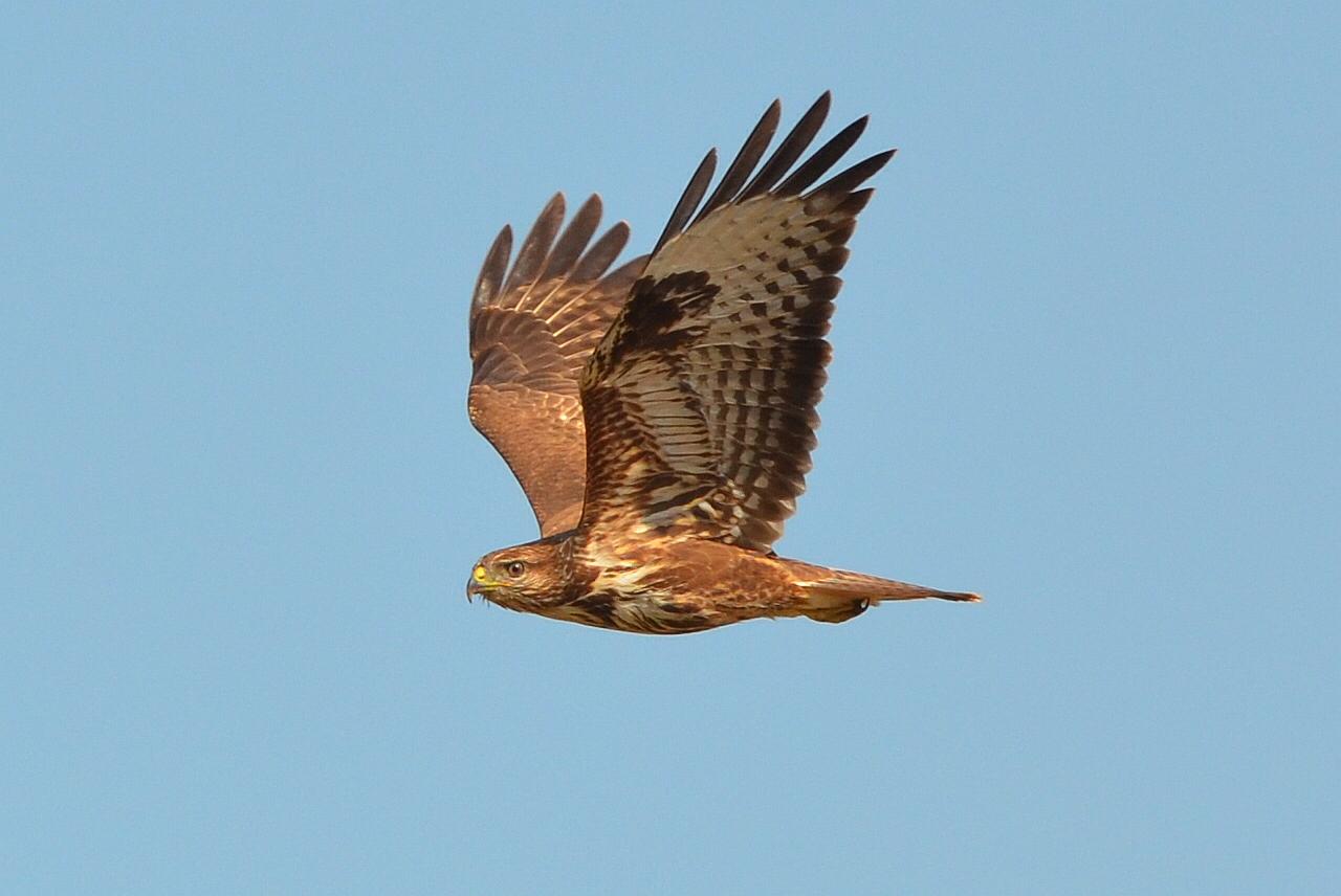 Wildlife in Kreta
