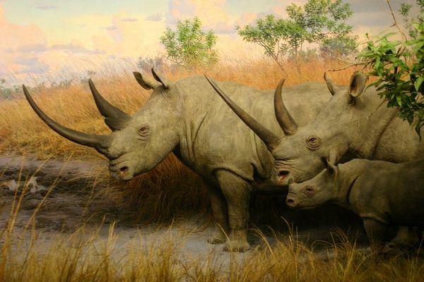 Wildlife in Nordamerika...