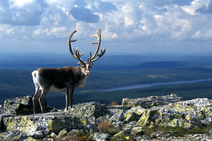 wildlife in sweden