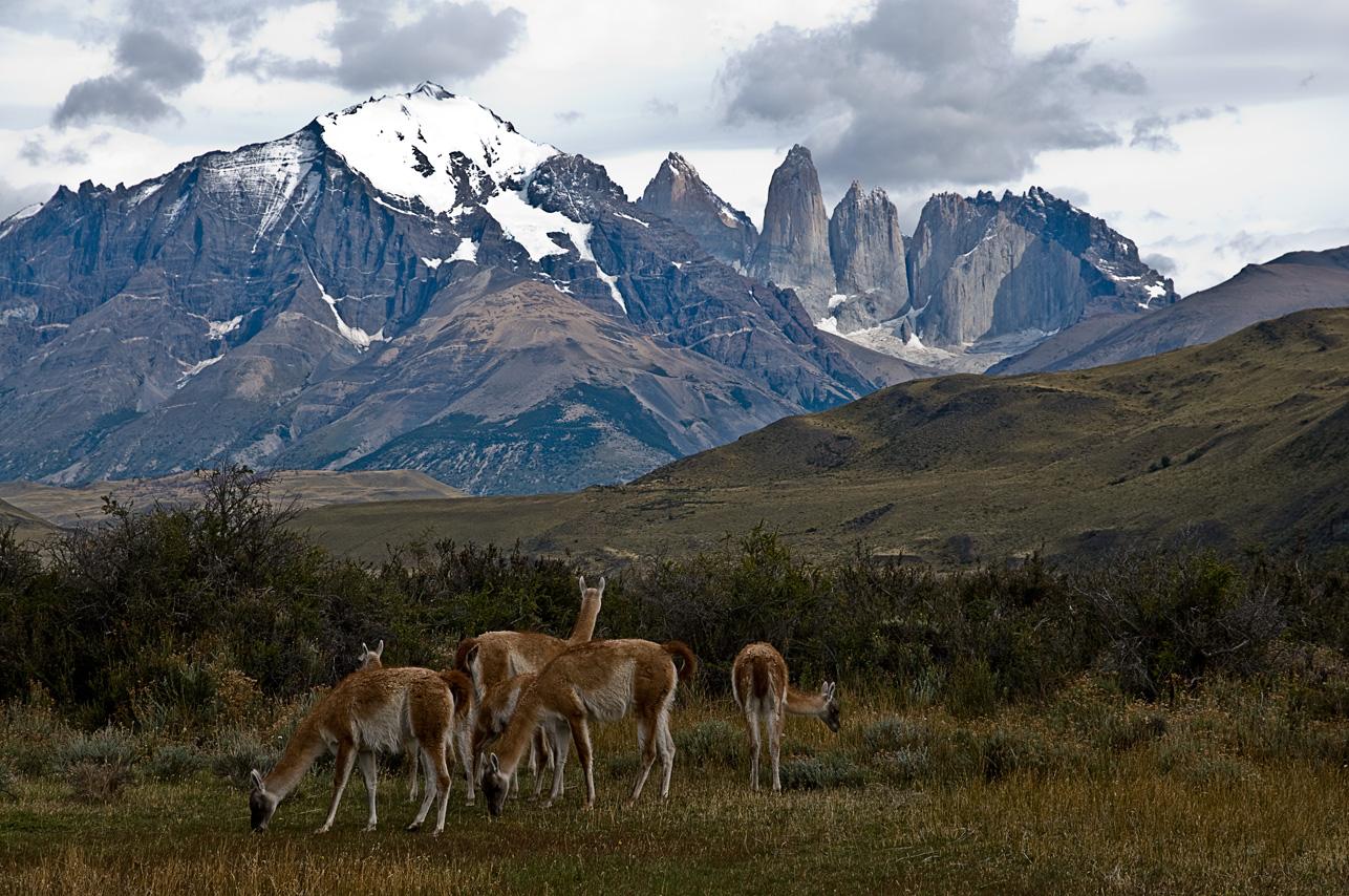 Wildlife / Torres del Paine NP - Chile