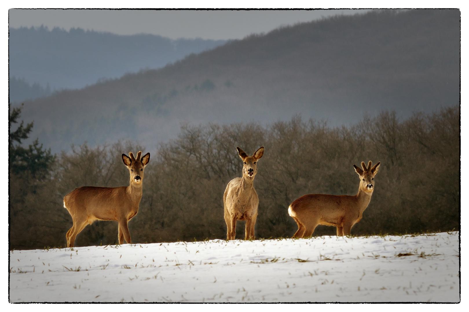 Wildlife vor der hessischen Haustür