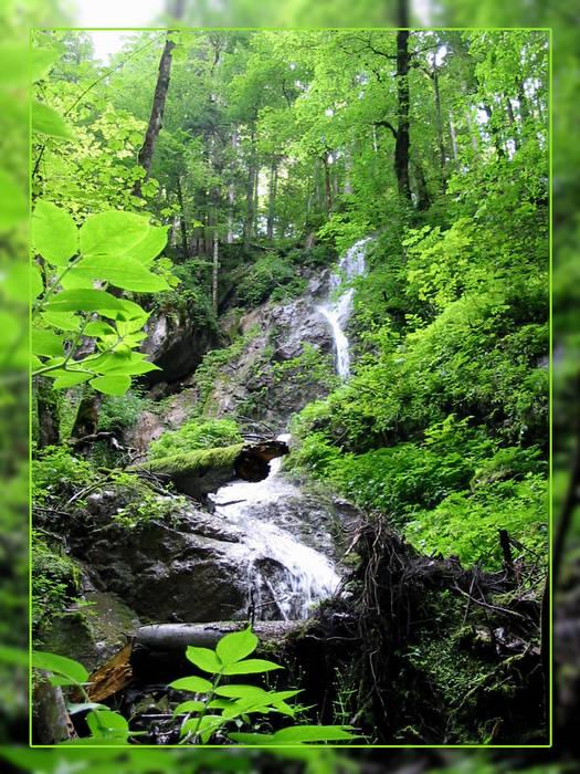 Wildnis in Tirol