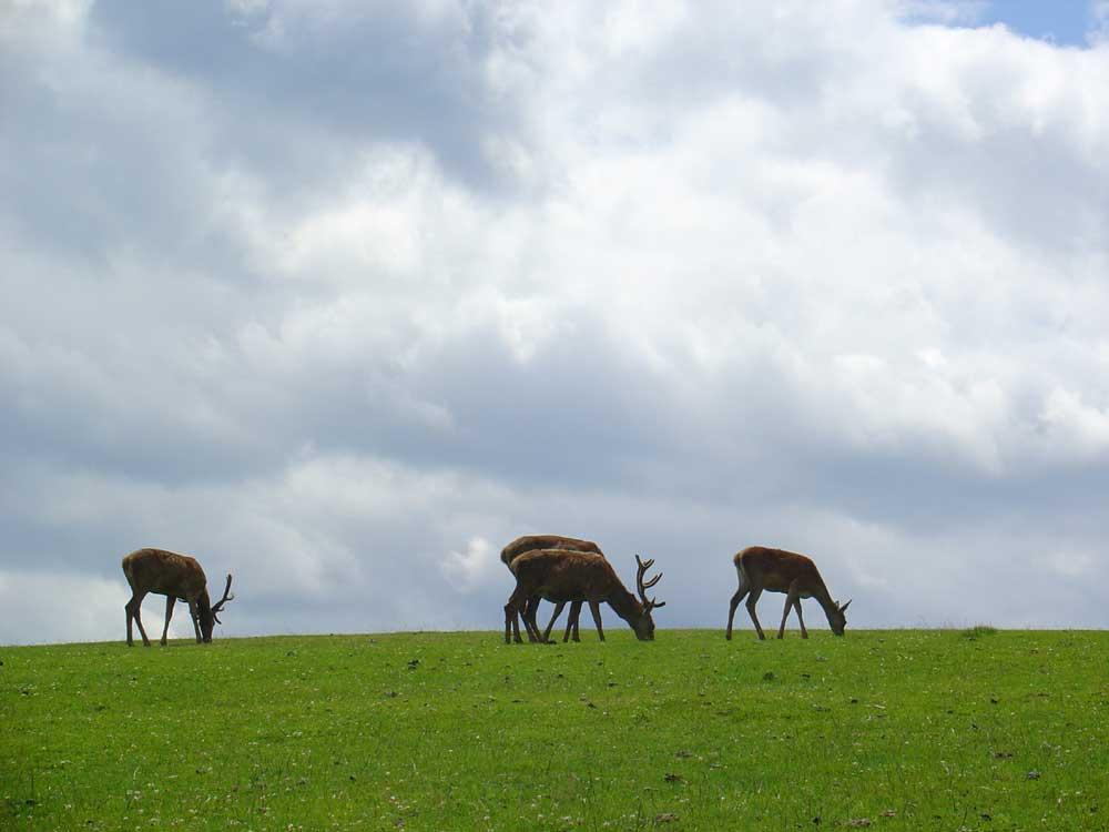 Wildpark Hochkreut - Salzkammergut