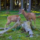 Wildpark Poing II