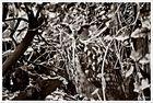 Wildpark Schwarze Berge - Versteckspiel der Eule