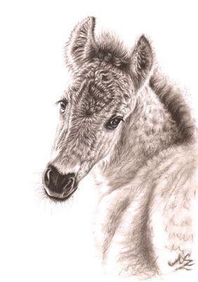 Wildpferd-Fohlen