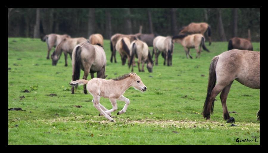 Wildpferde 5