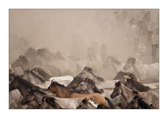 Wildpferde II