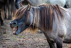 Wildpferde im Merfelder Bruch_03