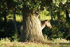 Wildpferde in den Emsauen