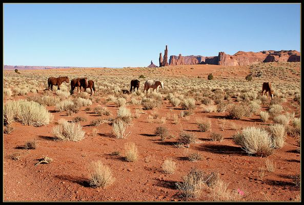 Wildpferde in Monument Valley