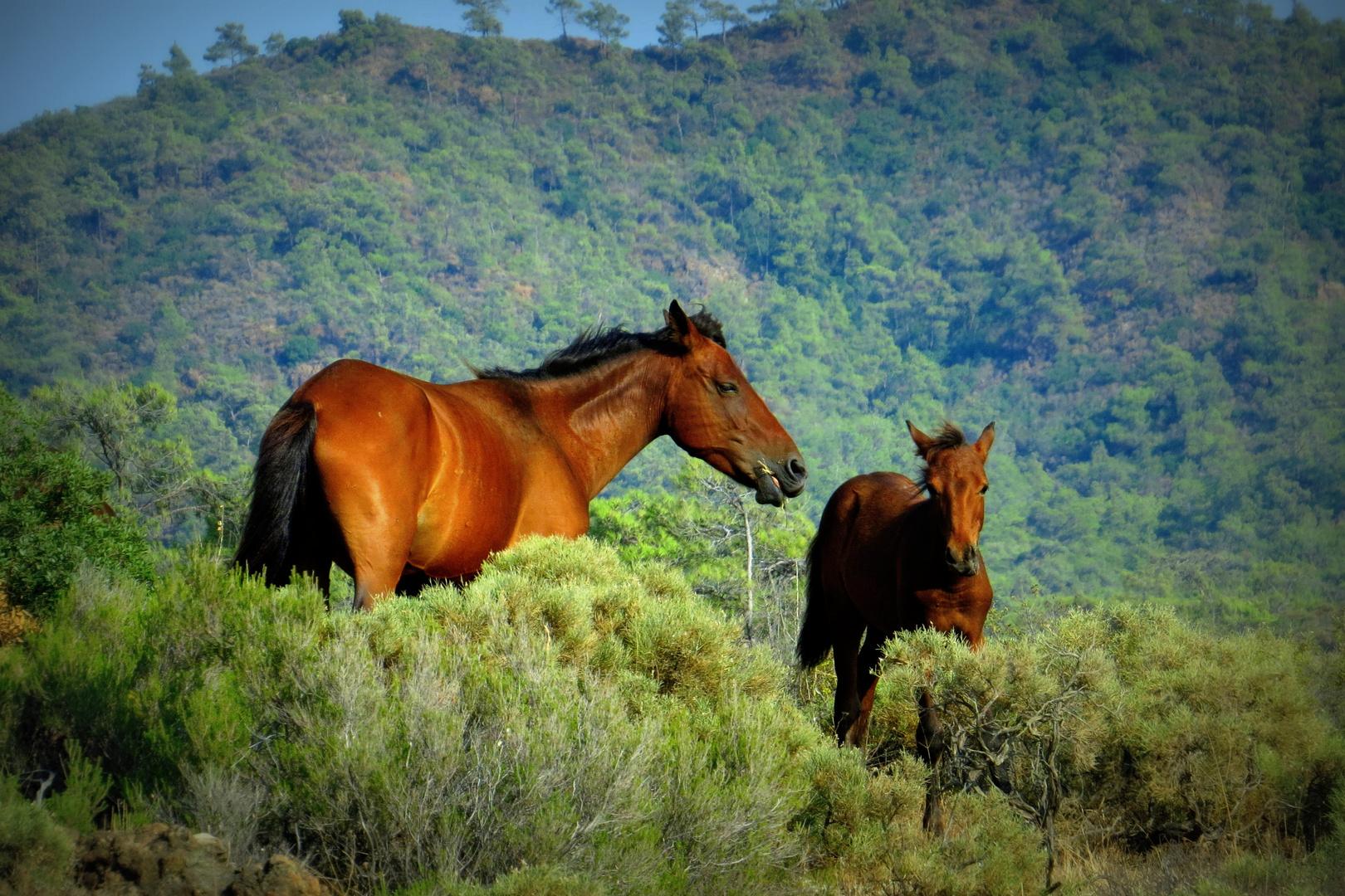 WildPferde oder wilde Pferde?