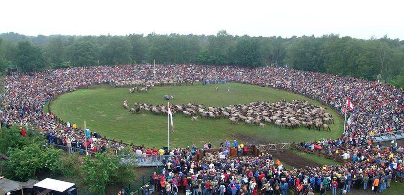 Wildpferdefang 2006