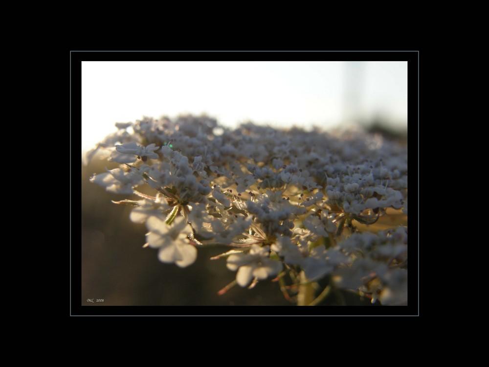 Wildpflanzen IX