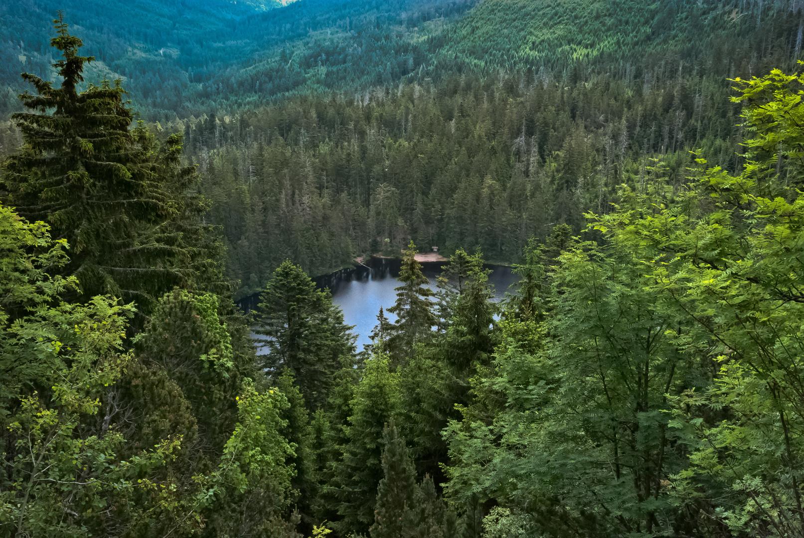 Wildsee-Erlebnistour (Wildseeblick)