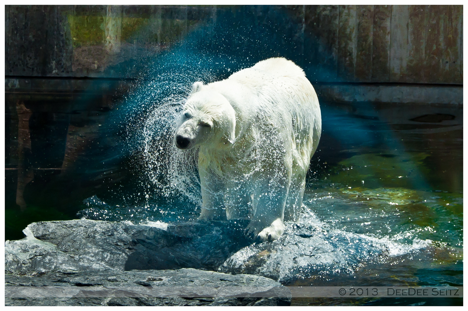 Wilhelma - Eisbär