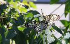 Wilhelma Stuttgart Schmetterlingshaus