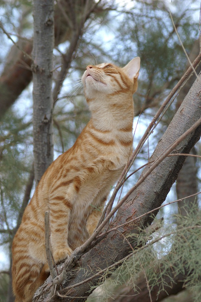 wilkde Katze
