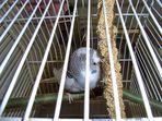 Willi in seinem ersten Käfig