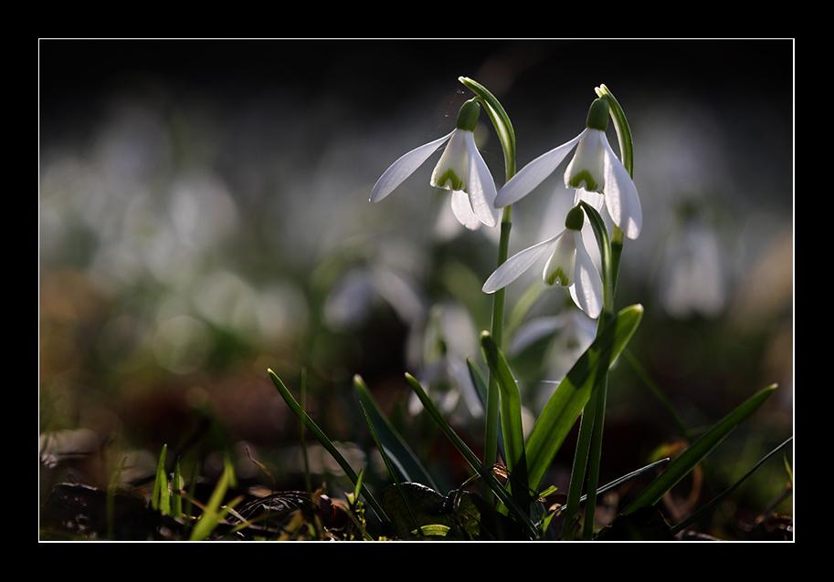 Willkommen, Frühling (2)!