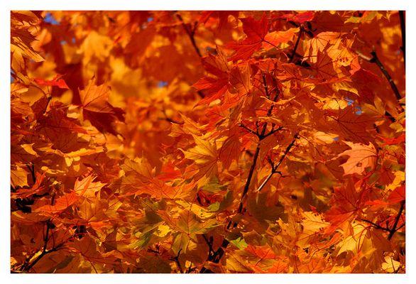 ...willkommen im Herbst No. 6, im Rausch der Farben...