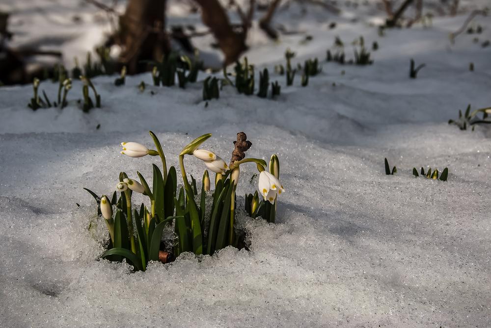 Willkommen im März