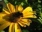 '' Willst du Gottes Wunder seh'n,musst du zu den Bienen geh'n''