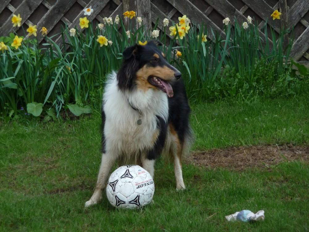 willst du mit mir Fußball spielen?
