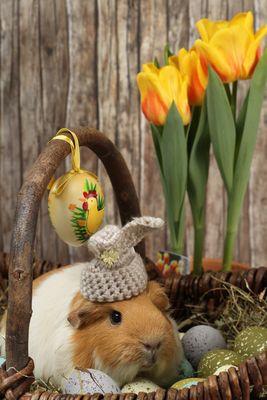 Wilma wünscht frohe Ostern