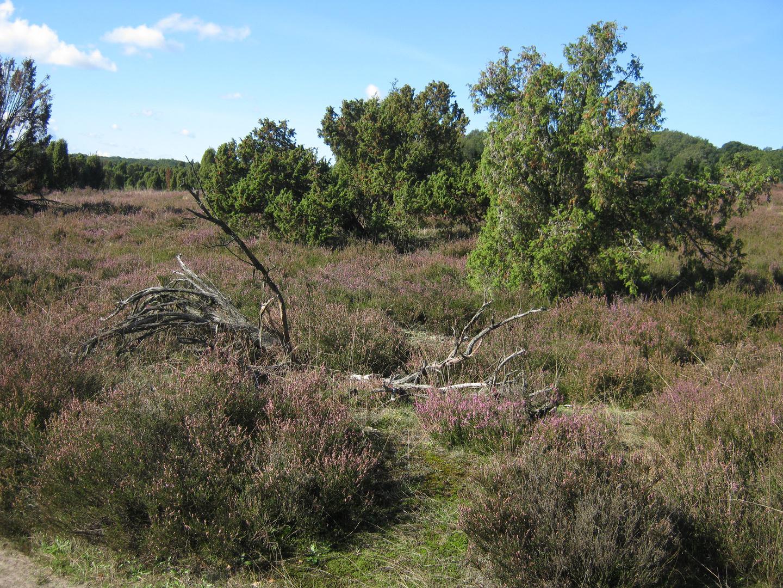 Wilsedeberg in der Heide