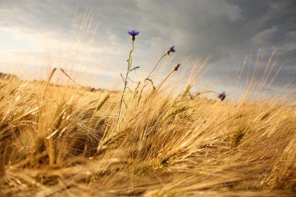 ..wind..