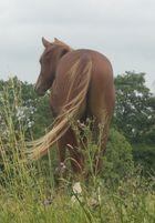 Wind auf der Weide