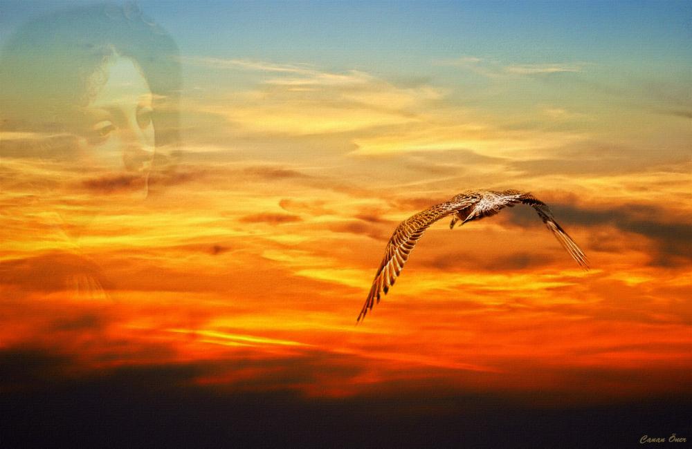 Wind Beneath My Wings....