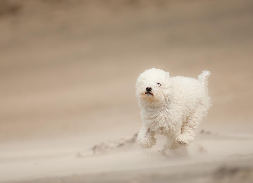 Wind gehört zum Strand...