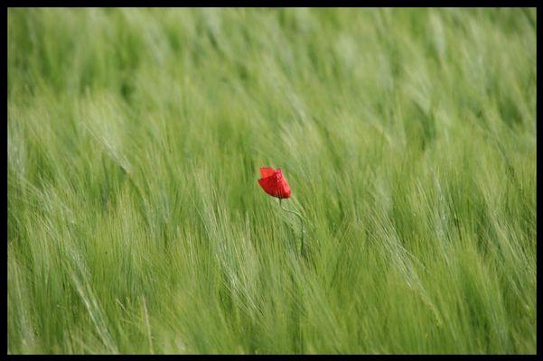 Wind im Feld