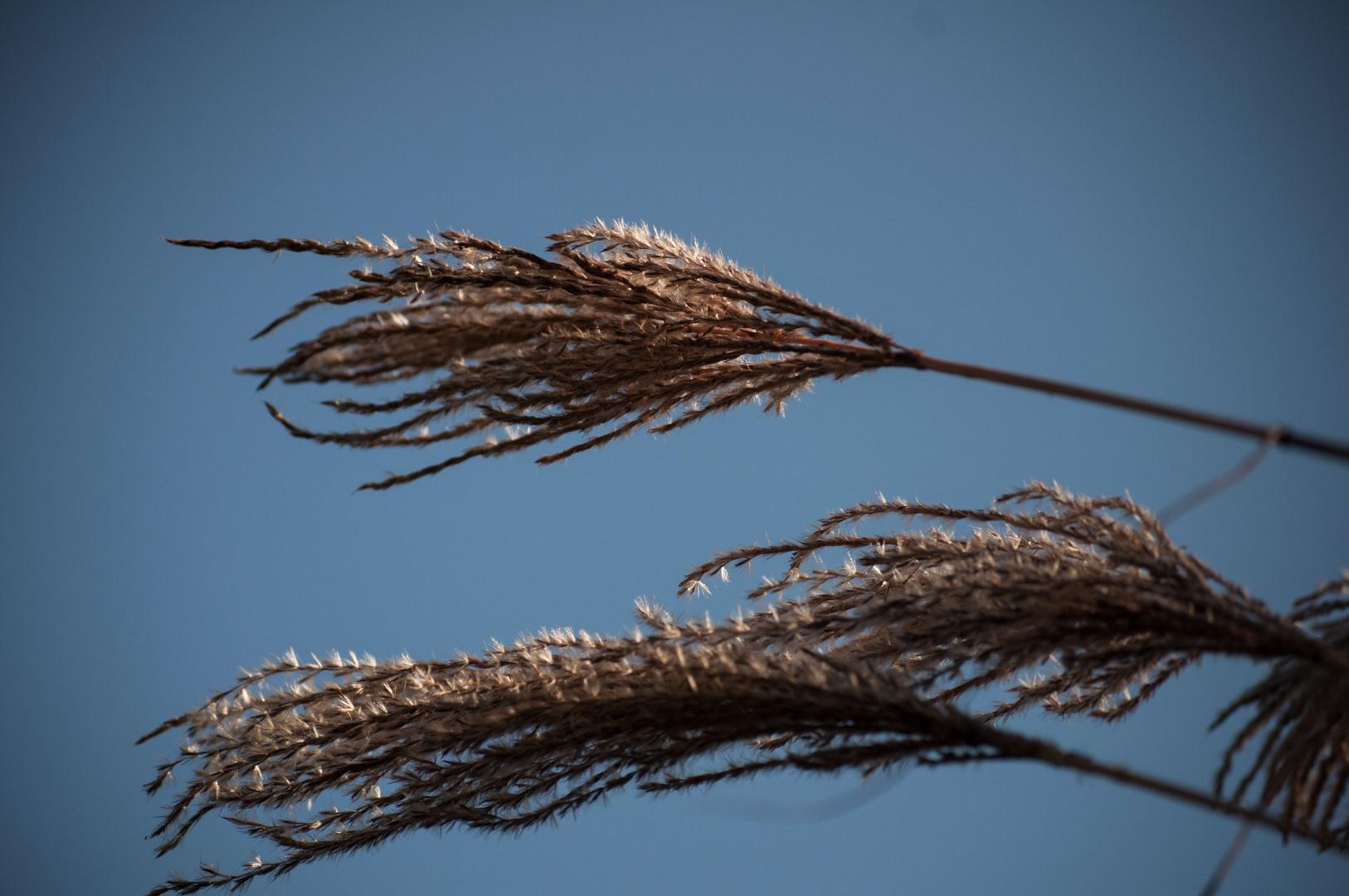 Wind in den Gräsern.