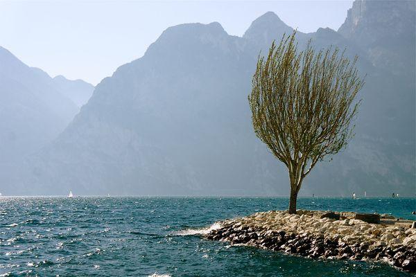 Wind kämmt den Seebaum
