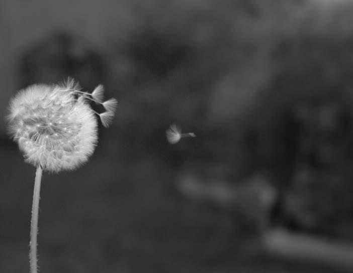 wind und poesie