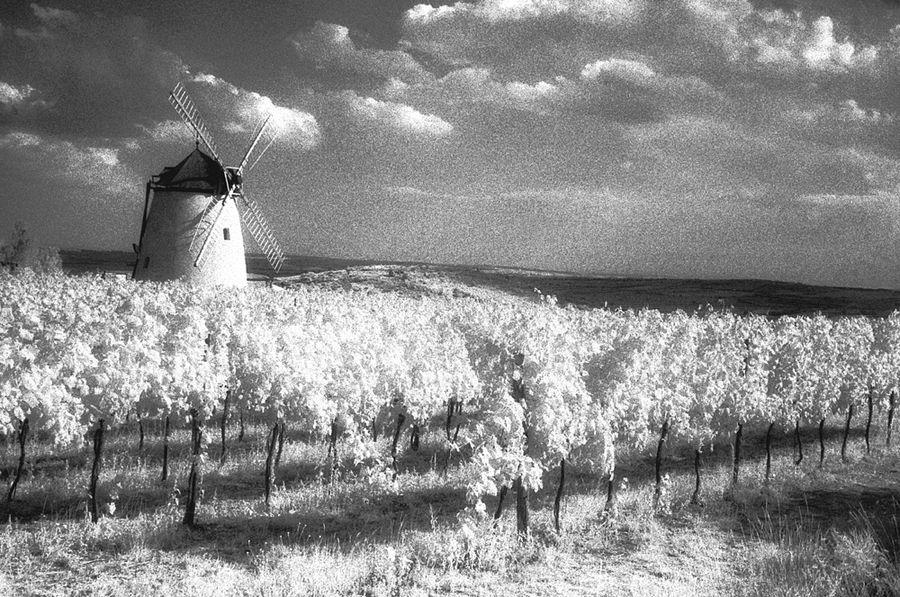 Wind und Wein von Peter