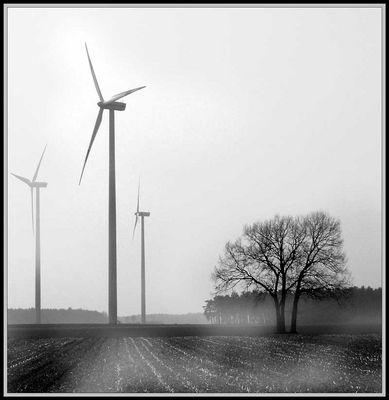 Wind von SSOST :-)
