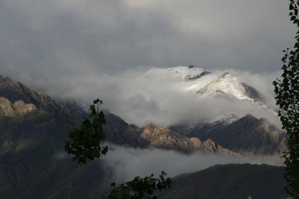 Wind, Wolken und Bäume in Ladakh - 1