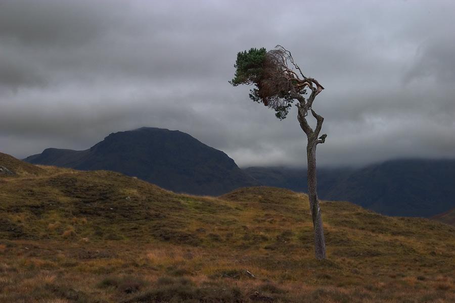 Windbaum