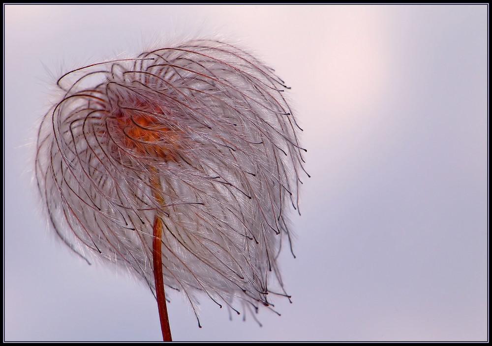 Windfänger...