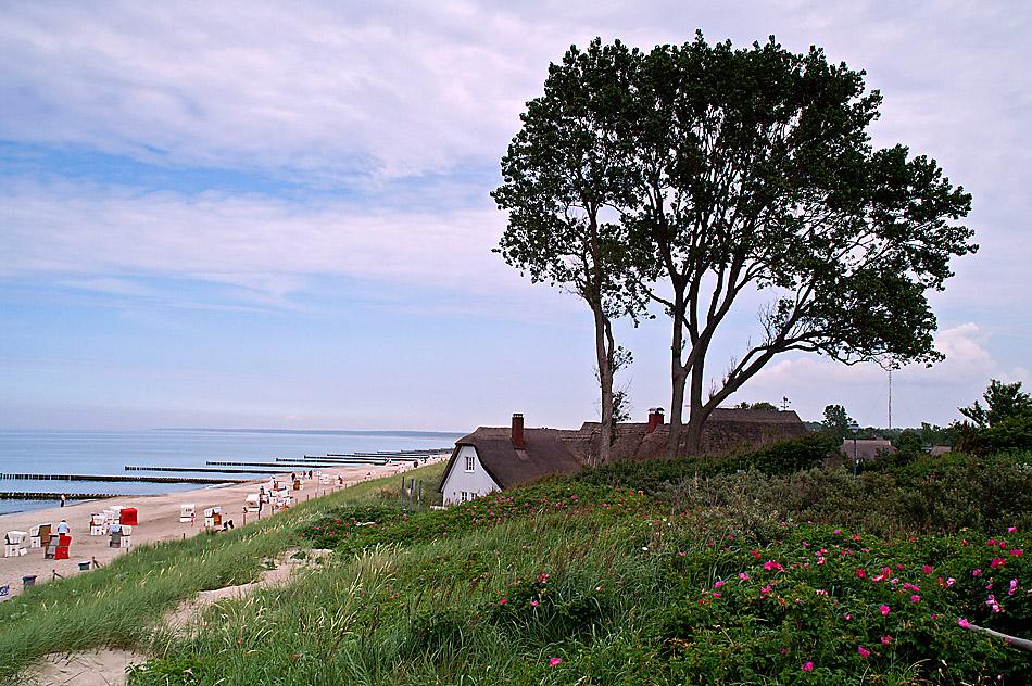 Windflüchter an der Ostsee