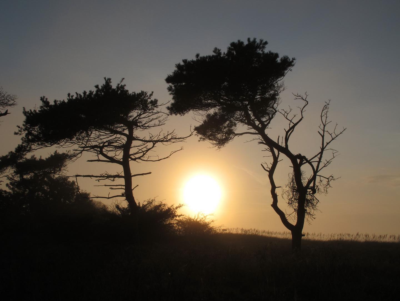 Windflüchter im Sonnenuntergang